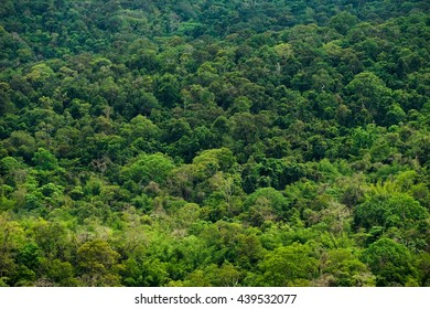 Forrest of green trees on mountainside