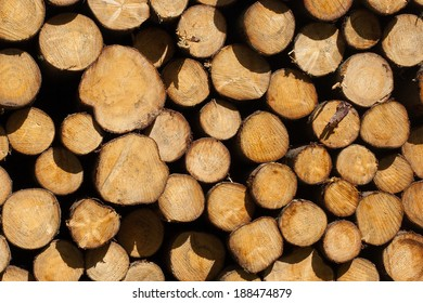 Forrest industry, stacked timber in a dutch forrest