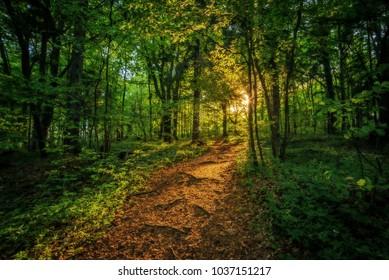 Forrest light slovakia