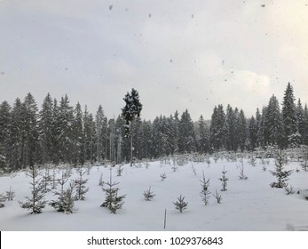 Forrest at mountaines during snow storm