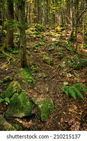 Forrest path and stone with ferns