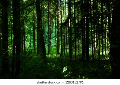 Forrest in the Summer