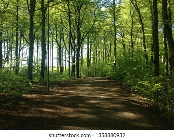 Forrest at summer in Larvik, Norway