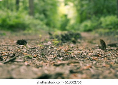 Forrest trail with pine needles in closeup. Lots of depth of field and beautiful colors