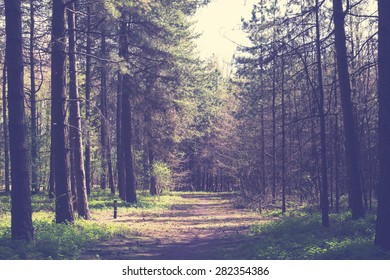 Forrest trees with path in the middle, vintage retro look