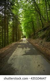 Forrest way
