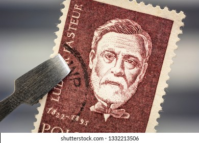 Fort Collins, CO, USA - March 6, 2019: Portrait of Louis Pasteur, French chemist and microbiologist, on a vintage, canceled post stamp from Poland held by tweezer above a page of stamp album