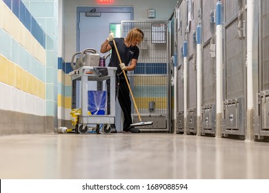 Fort Lauderdale, Florida / USA - 3/28/2020: Young fit man wearing gloves and a blue uniform cleaning the floor of a dog kennel with waterm soap and a squeegee at a county animal shelter near cage door