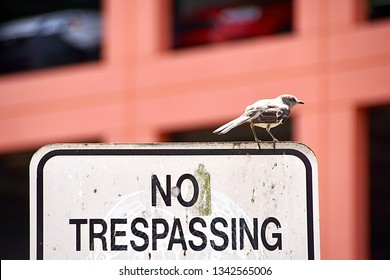 Fort Myers, FL/USA- March 10, 2019: A horizontal image of a bird sitting atop a NO TRESPASSING sign in downtown Ft Myers with a public parking garage in the background.