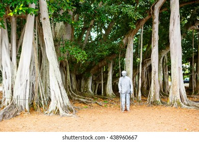 FORT MYERS,FL-APRIL  15 2016: Fort Myers Florida, Thomas Edison statue near big banyan tree outside of his summer home and laboratory in Fort Myers, USA.