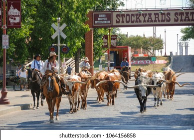 Fort Worth, Texas - September 2009: A herd of cattle parading through the Fort Worth Stockyards accompanied by cowboys on horseback