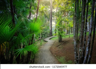 Fort-de-France/Martinique - January 15, 2018: Tropical Balata garden. The Balata is a botanical garden located on the Route de Balata about 10 km outside of Fort-de-France, Martinique