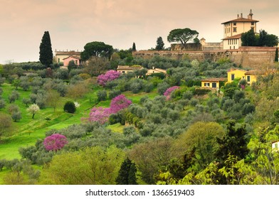 Forte di Belvedere in Florence in Italy, taken from Piazzale Michelangelo on a spring day with purple flowered trees. Italy.