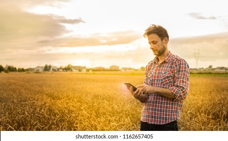 Forty years old caucasian farmer in plaid shirt working on (using) tablet in front of wheat field. Modern technology in agriculture - concept. Country outdoor scenery, sunset light.