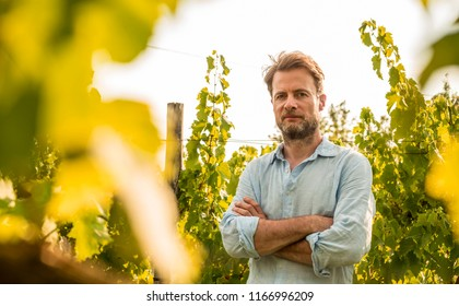 Forty years old caucasian farmer standing proud in front of a vineyard. Agriculture or gardening - country outdoor scenery, warm sunset light.