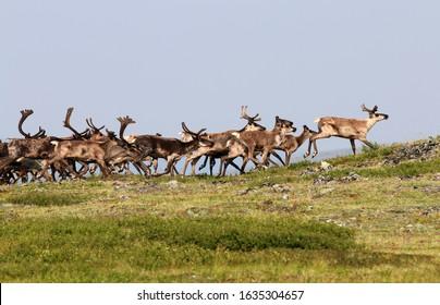 Fortymile Caribou Herd Boundary Alaska