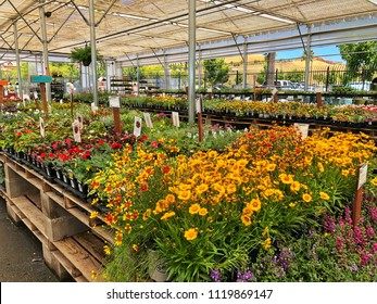 FOSLOM, CA, USA - JUL 21, 2018: Nursery with colorful flowers in sunny summer day .