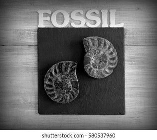 fossil black and white