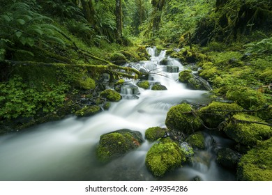 Fossil Creek, Washington State, USA
