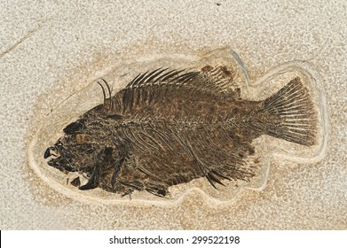 Fossil of a fish.