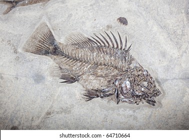 fossil fish green river wyoming usa