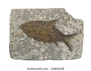 Fossil of fish. Isolated on white.