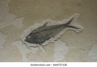 fossil of fish on rock