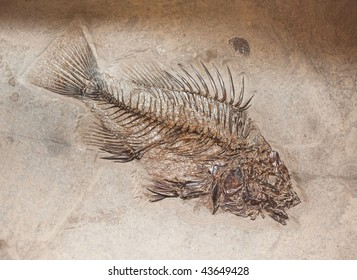 fossil fish in stone