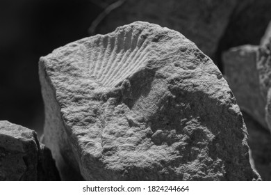 Fossil with seashell and insect