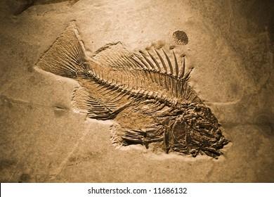 fossilised fish