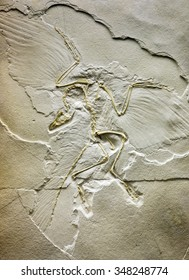 fossilized archaeopteryx imprint in the stone
