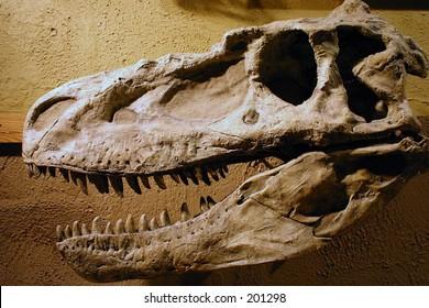 Fossilized dinosaur skull