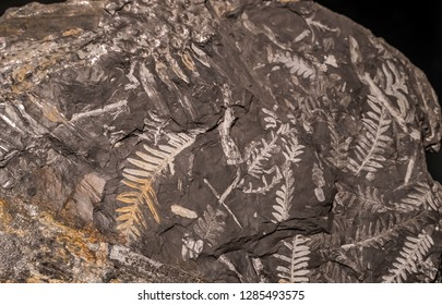 Fossilized preserved leaves