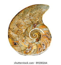 fossilized remains of prehistoric sea shell in stone