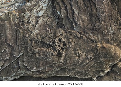 Fossilized rocks at World Heritage SIte Joggins Fossil Cliffs, Nova Scotia, Canada.