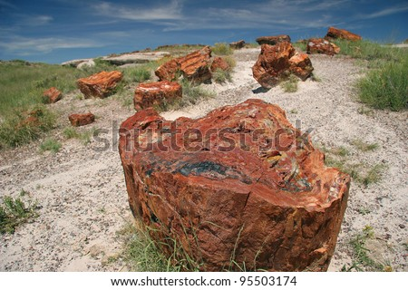 Fossilized Tree Trunks from the Triassic Period - Petrified Forest National Park, Arizona