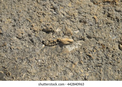 Fossils encrusted in a sedimentary rock in Algarve, Portugal. Backgrounds and textures