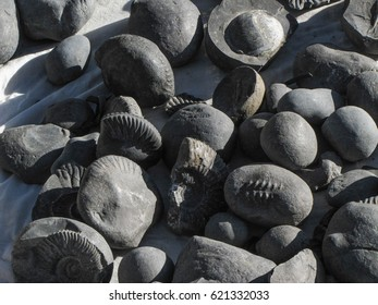 Fossils of Nepal