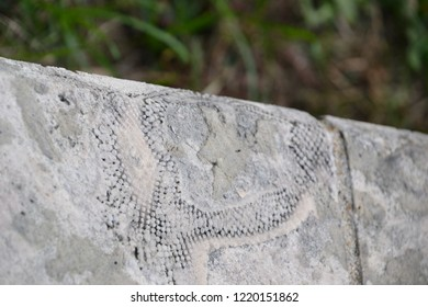 fossils preserved  naturally in stone