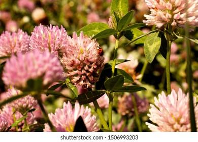 Foto beautiful flowers  on field with ladybug