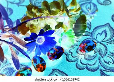 foto creativa floreale