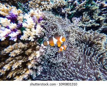 Beautiful Nemo Images, Stock Photos & Vectors | Shutterstock