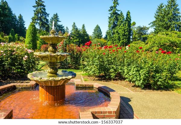 Fount Portland Rose Garden Stock Photo Edit Now 156337037