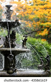The fountain in the garden and have peacock flowers is blooming of nature background.
