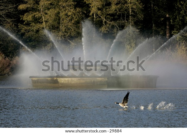 fountain with goose