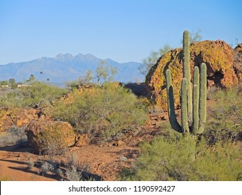 Fountain Hills Botanical Garden in Arizona, is a gem of desert landscape, geology, and flora.  The mystery of the  landscape is palpable in every direction, with The Four Peaks visible to the East.