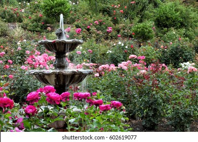 Roses Garden Images Stock Photos Vectors Shutterstock