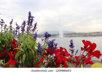 The fountain of the lake of Geneva