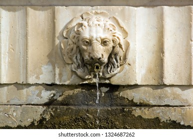 Fountain lion Bas relief, square Saint-Martin de Lucques (Lucca Tuscany Italy)