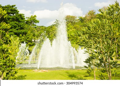 Fountain on soil hill in group tree.